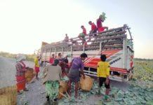 Pang Laung Nong Tayar Cabbage farm 26 May 2020 1