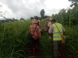 Kan Lint Let Myar Social Volunteer group carrying the dead body of Villager Chit Maung from his corn field
