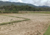 Photo Credit to Nang Mar Lar One the farms are dry cannot plants